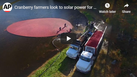 Cranberry farmers look to solar power for hope