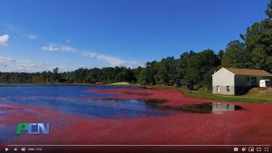 PCN's The Local Seen – Massachusetts Cranberries