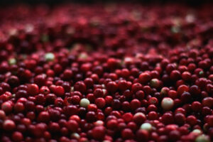 Read more about the article Massachusetts cranberry growers see 'solid crop' in the works