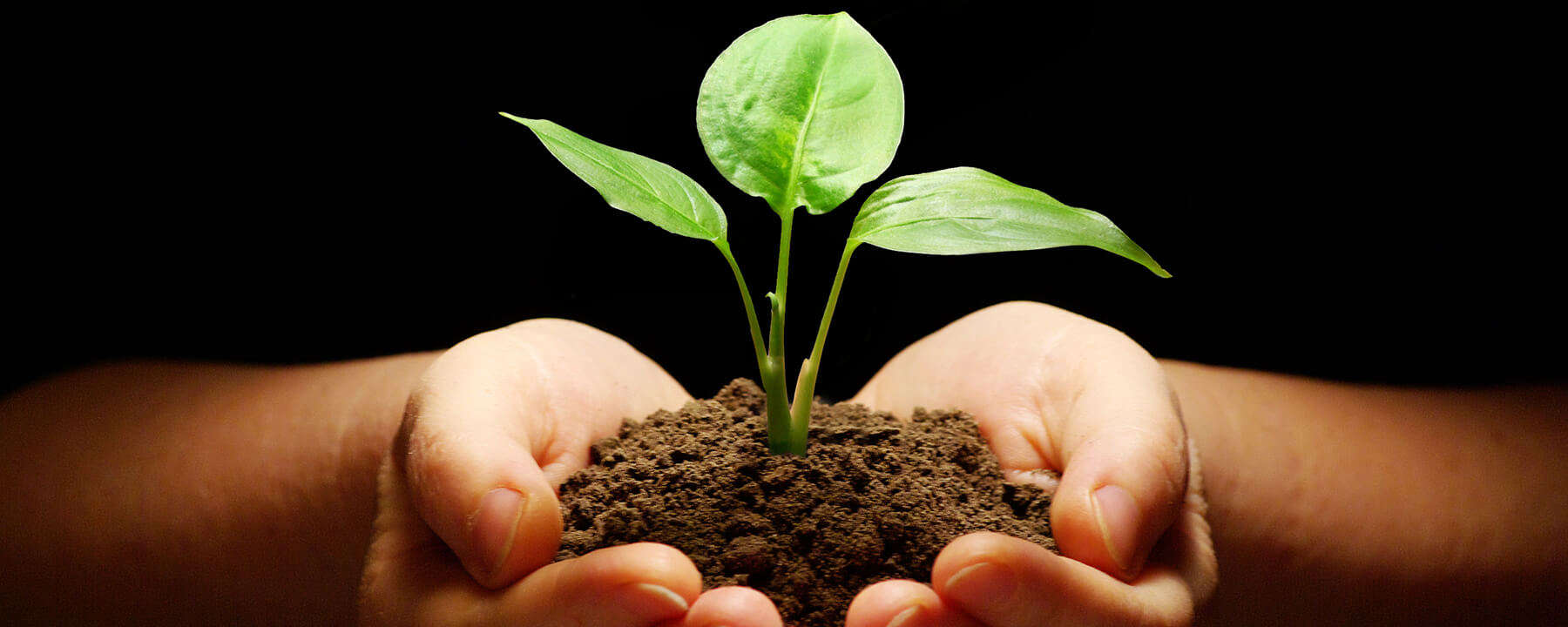 Plant nutrients and soil are available at Grass Root Grower LLC.