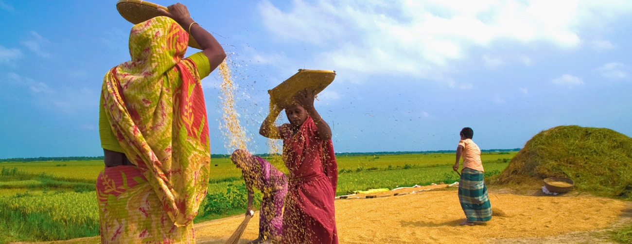 Rice Culture & Traditional Rice Seed Diversity of India
