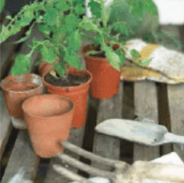Stock up on cold crop vegetable seeds