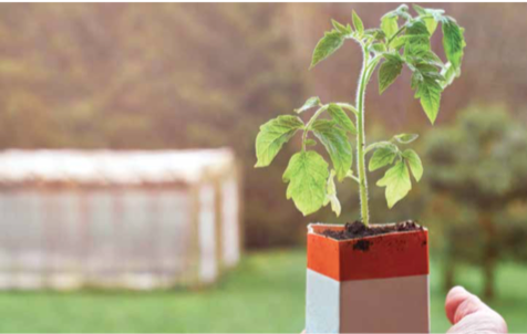 A container garden of hope