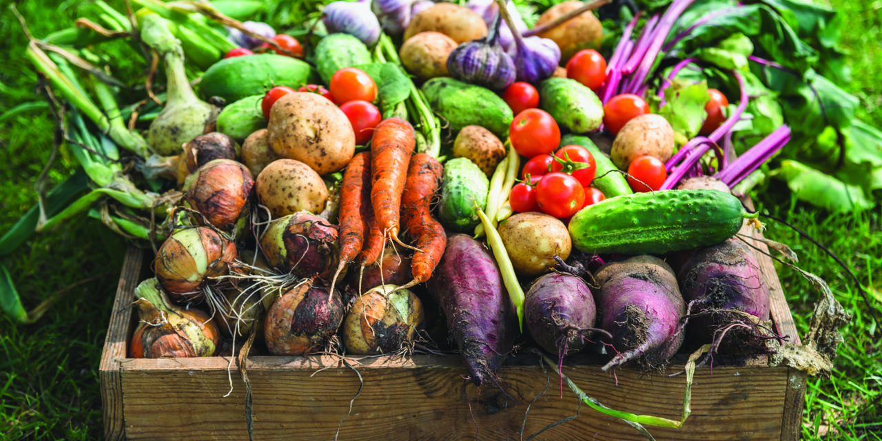Learn to extend your garden's fresh life