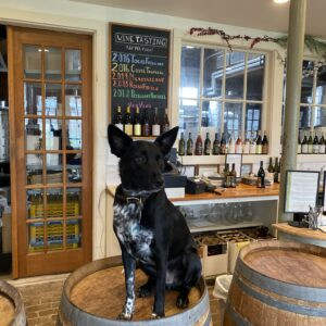 Rocky Road | Channing Daughter Winery Dog