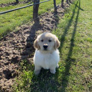 Birdie | Lieb Cellars Winery Dog