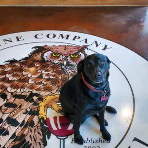 Fenway | Thirsty Owl Winery Dog