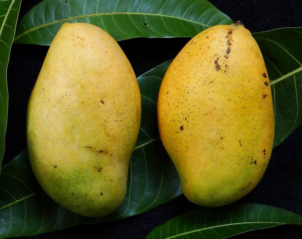 Fresh Results Mangoes