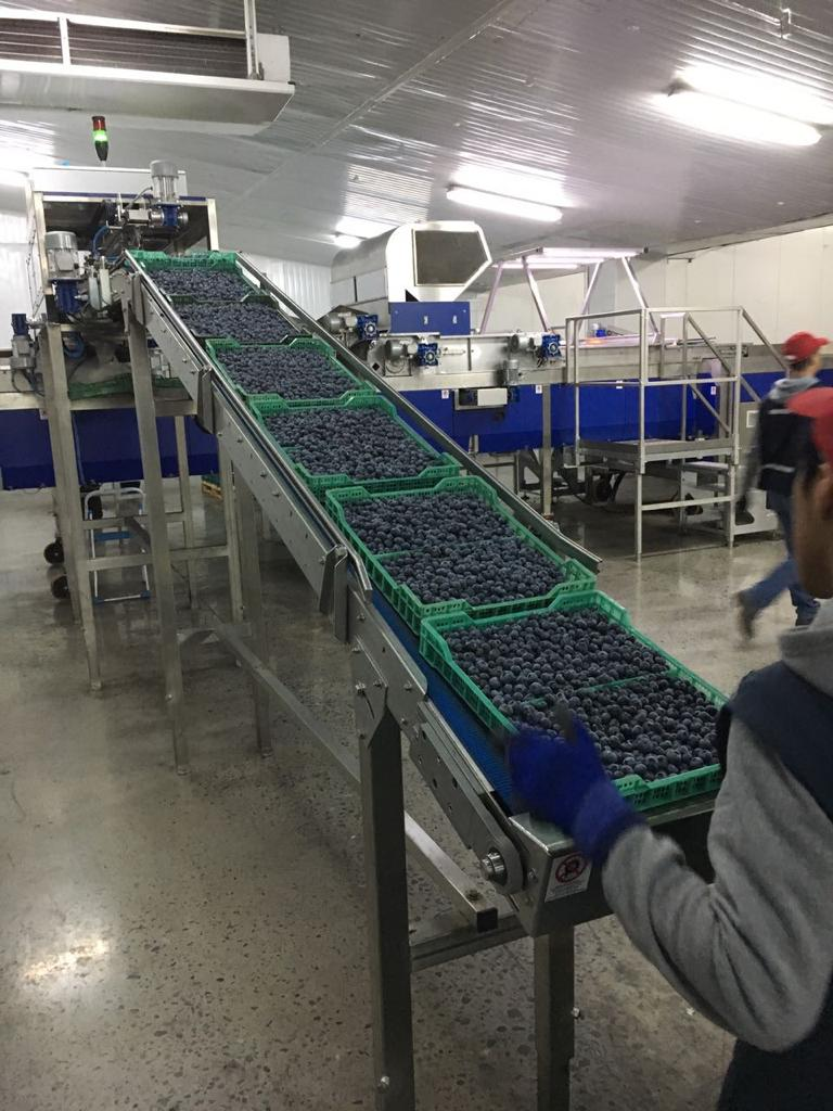 Blueberry Facility
