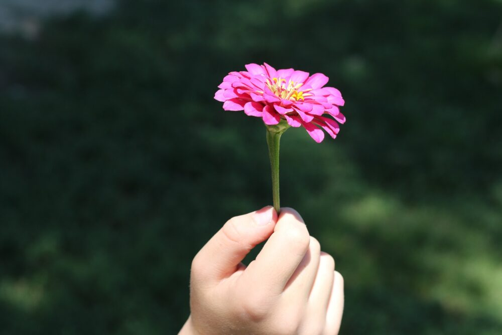 Small hand holding pink flower to the sun symbolizes enriching your life