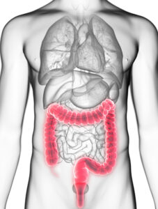 3d rendered medically accurate illustration of a mans colon