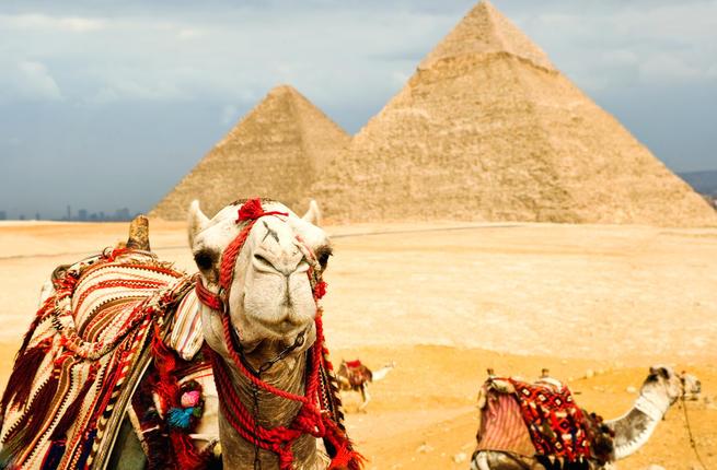 Camel in Egypt (Shutterstock)