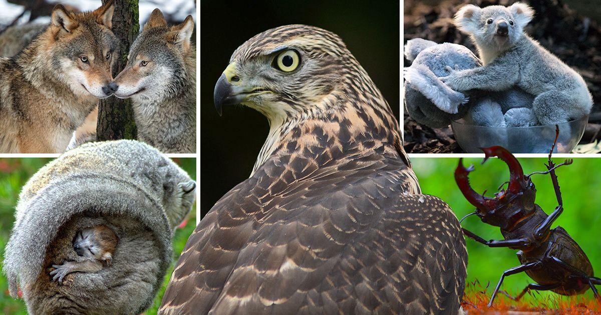 National Zoo & Aquarium Photo Award Winners