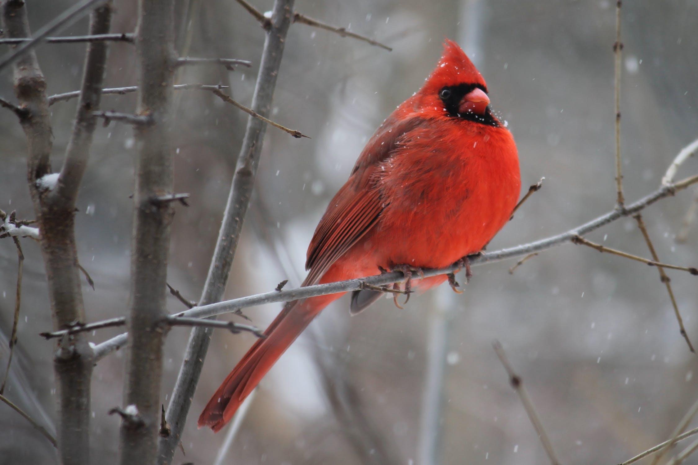 Attract Birds in Winter
