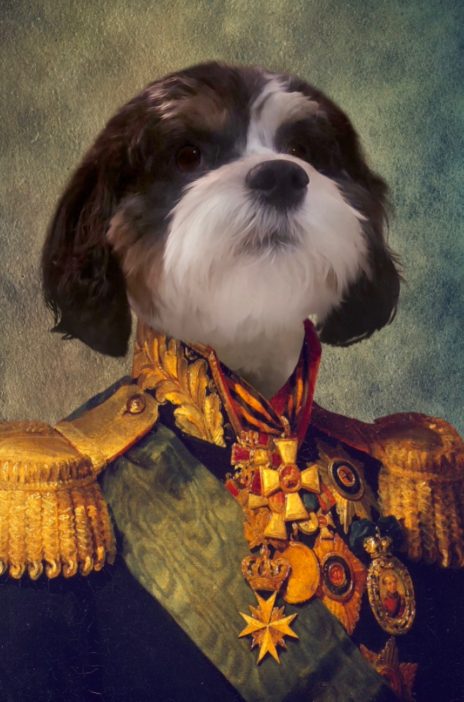 Dog dressed as general