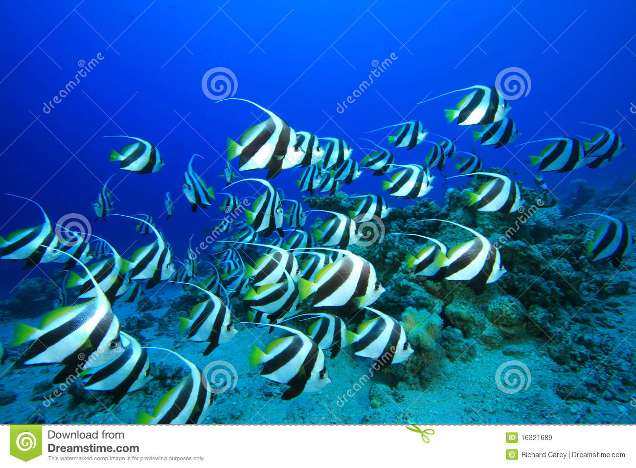 shoal-fish-16321689
