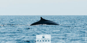 WWF studying plastics in whale tissues