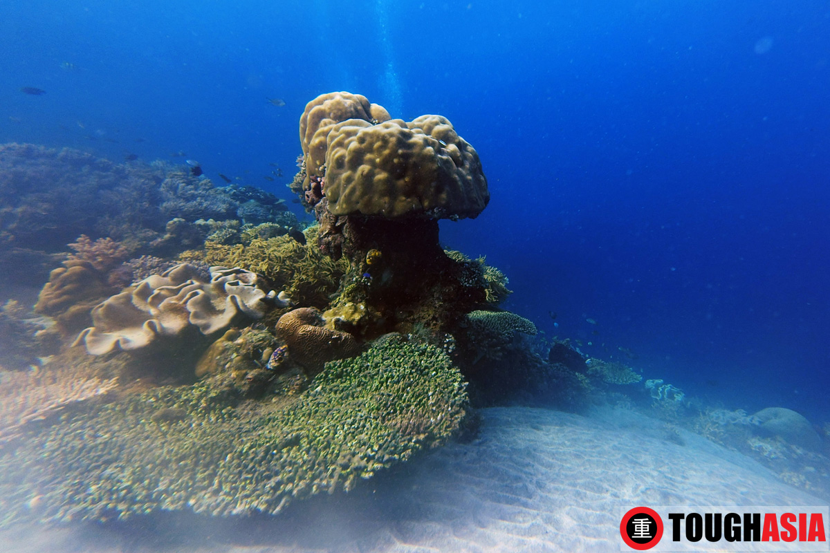 Magnificent underwater seascapes.