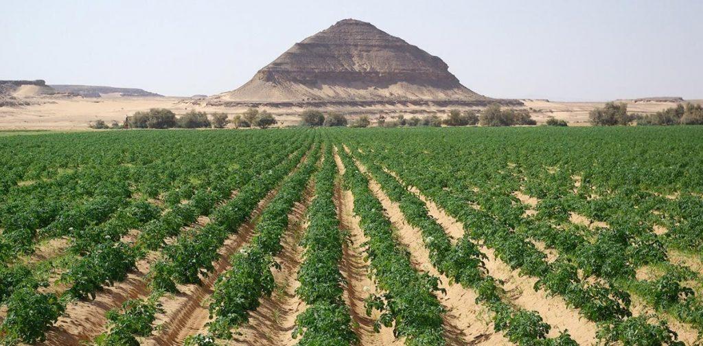 Oro Agri Obtains New Product Registration in Jordan
