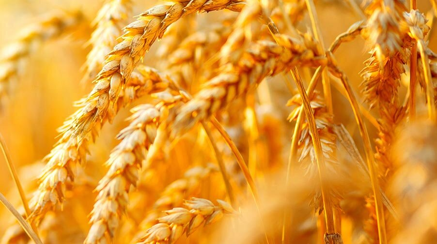 Omnia Acquires Oro Agri to Expand Global Reach