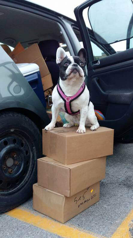 Small dog sitting on stacked boxes of Raw Pet Food