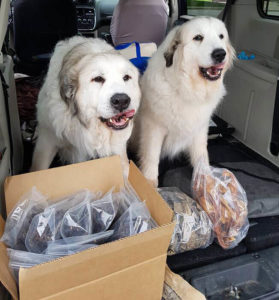 Dogs happy to be eating raw pet food