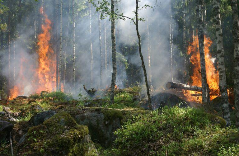 Forest Firestorms