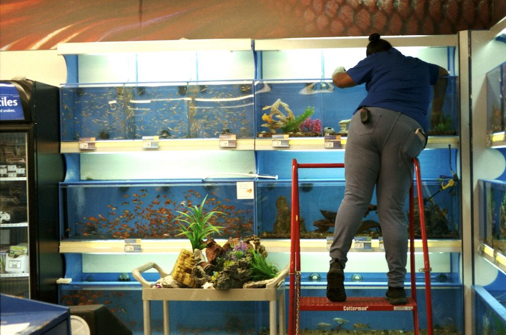 cody-swann-photo-242-petsmart-aquariums