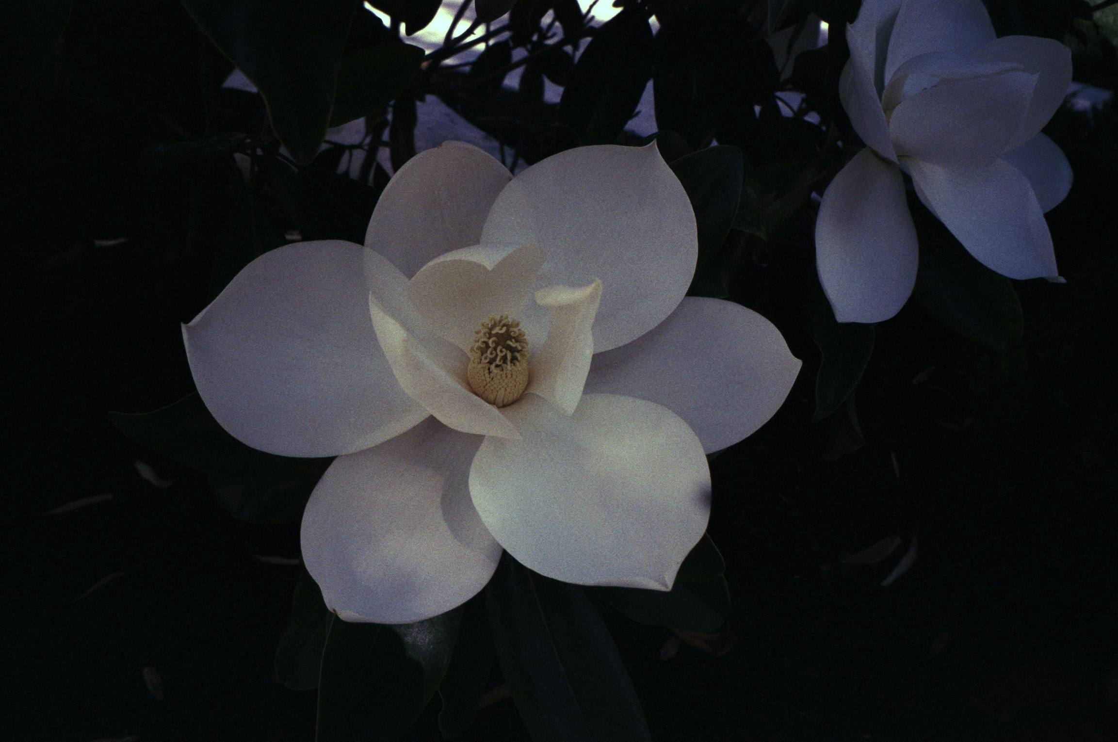 cody-swann-photo-329-magnolia