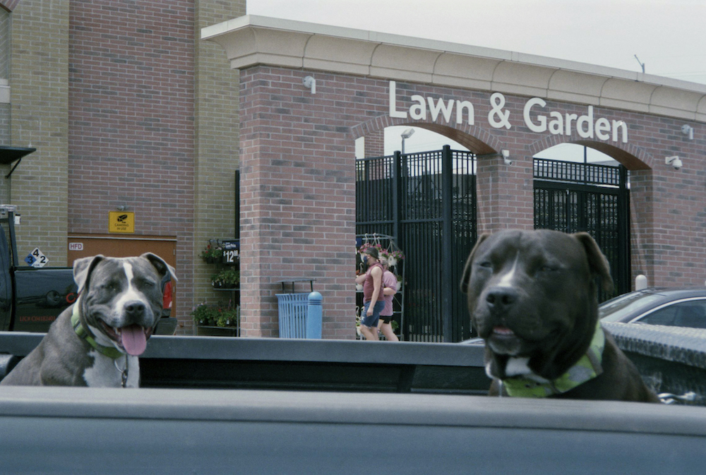 cody-swann-photo-342-all-dogs-go-to-walmart-1