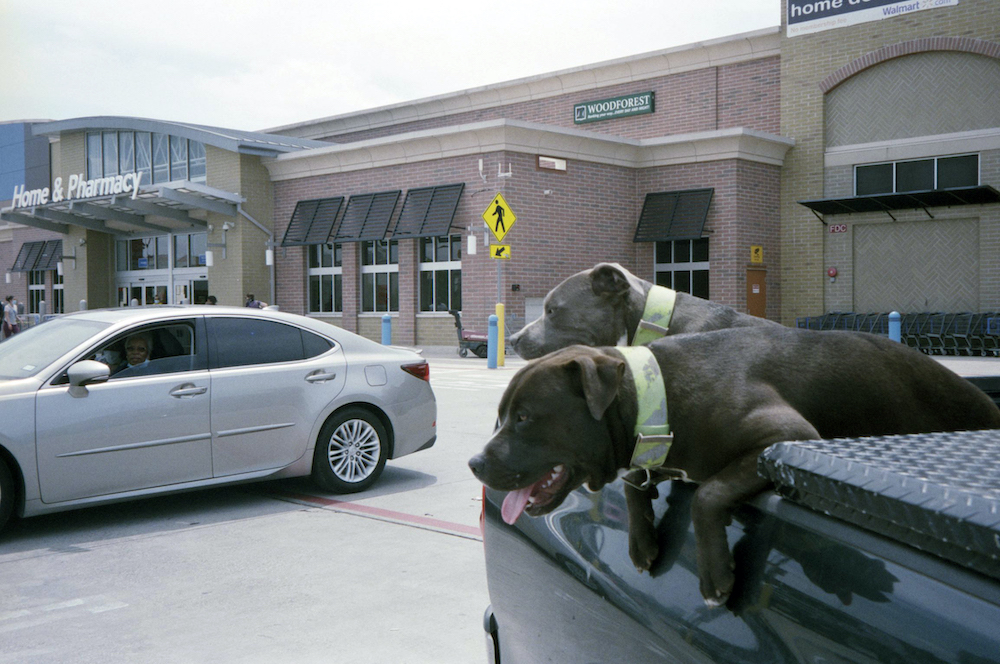cody-swann-photo-343-all-dogs-go-to-walmart-2