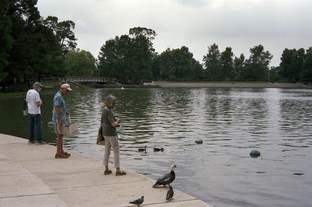 cody-swann-photo-384-hermann-park-ducks