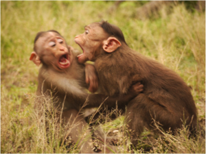 Monkeys Fighting
