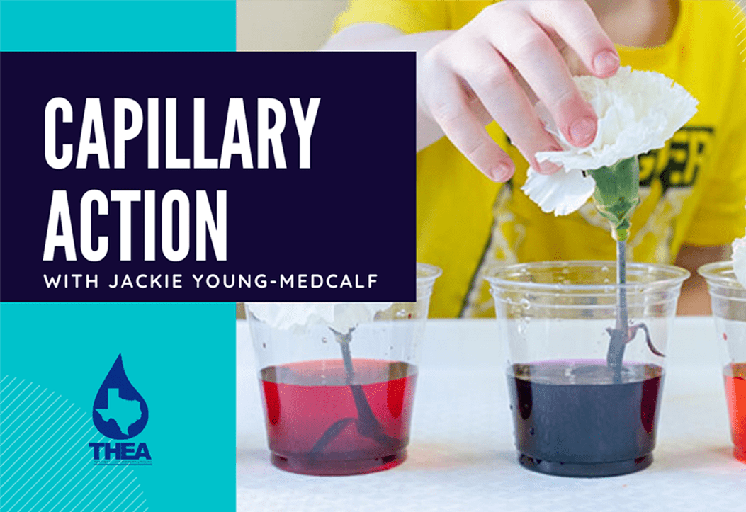 Home School Science Experiment: Capillary Action