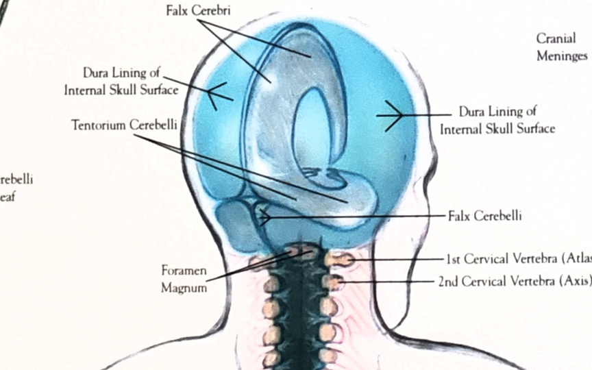 Cranial Sacral Therapy (CST)