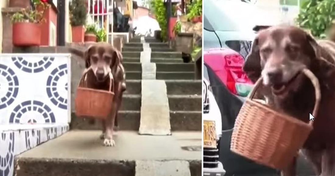 Perro repartidor de supermercado es asaltado en Colombia