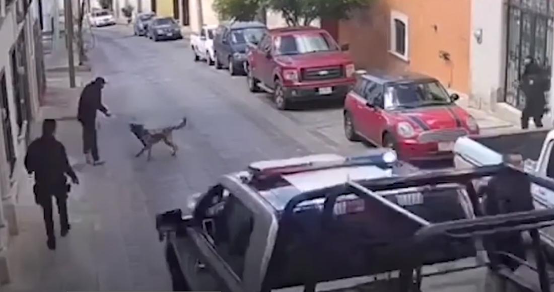 Rocko, un perro policía de Zacatecas, enfrenta a sujeto que lo agrede con un arma