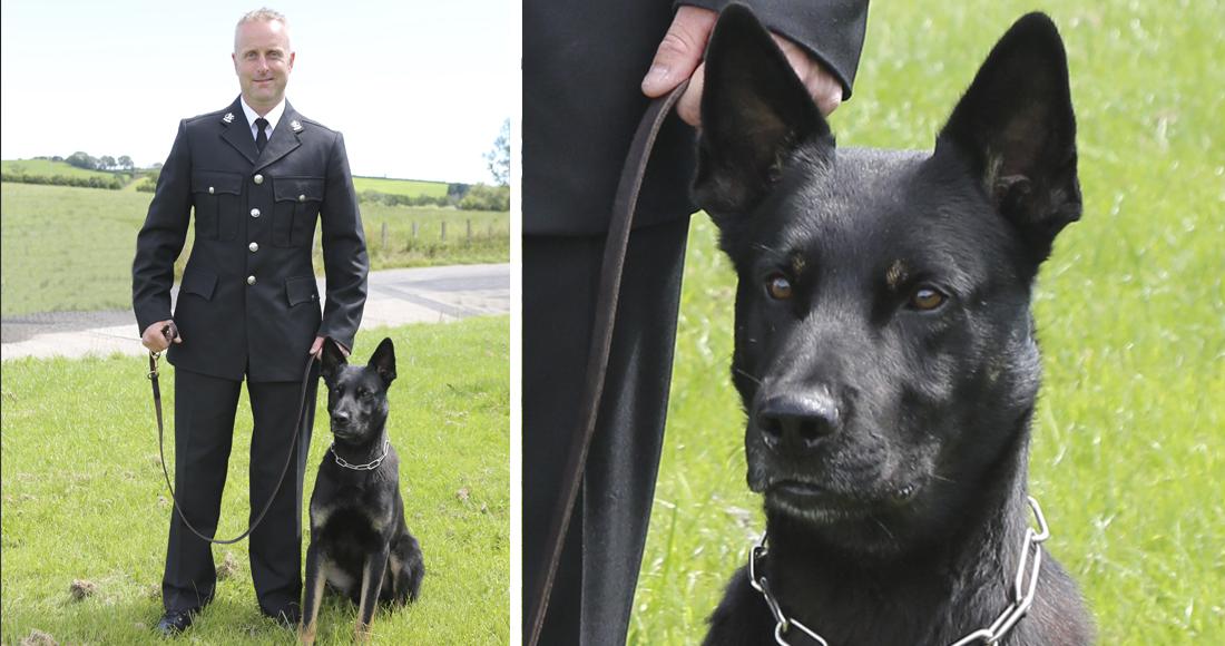 Perro policía de Gales rescata a mujer y su bebé en su primer día de trabajo