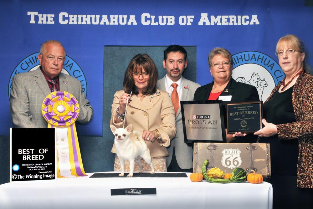 2015 CCA Fall Regional/National Specialty