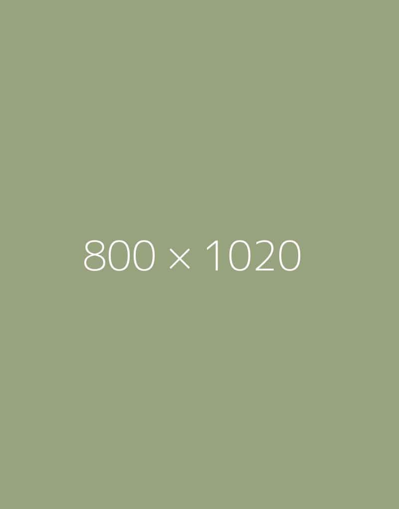 hongo 800×1020-b-ph