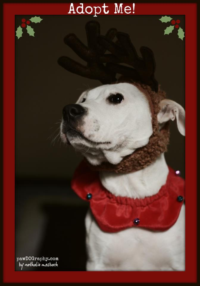 boo ready for christmas