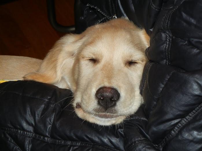 Sleepy Brandon