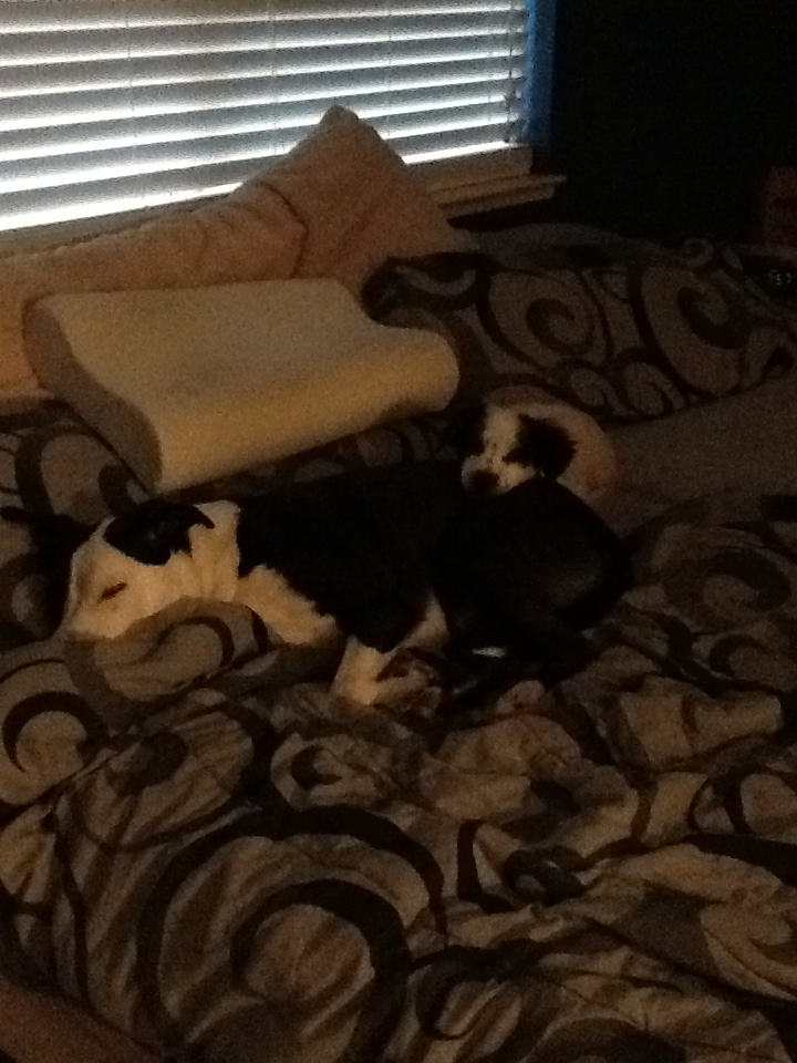 boon napping with his brother