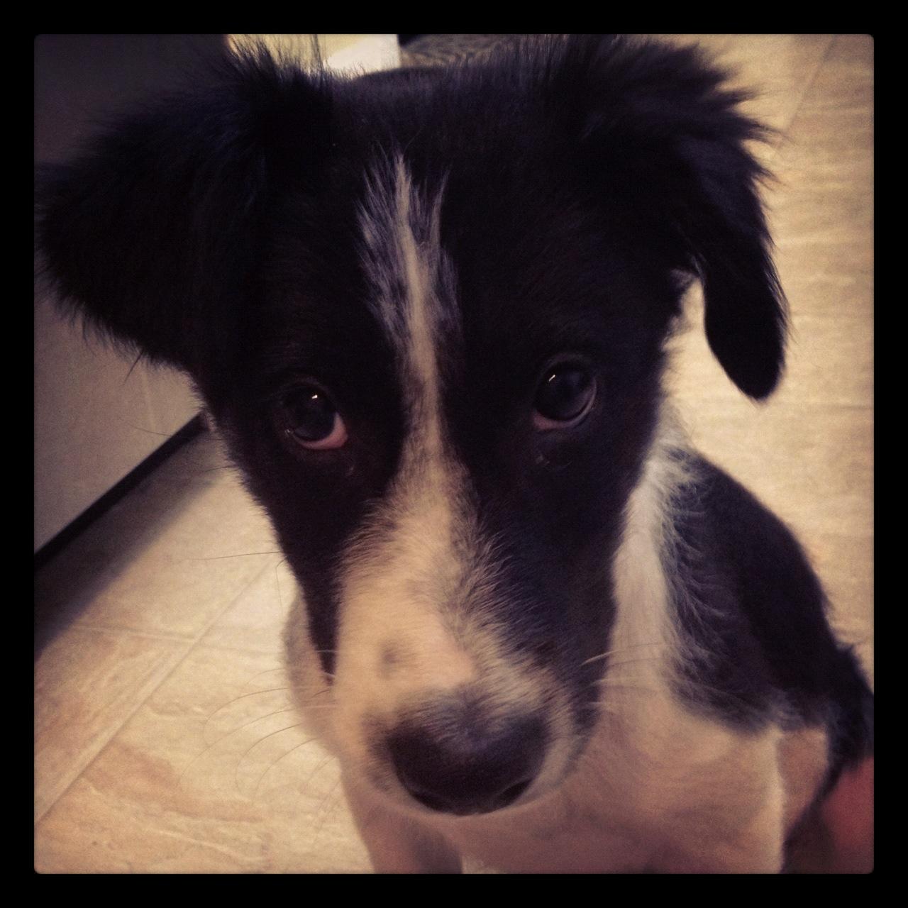 Oreo looking cute