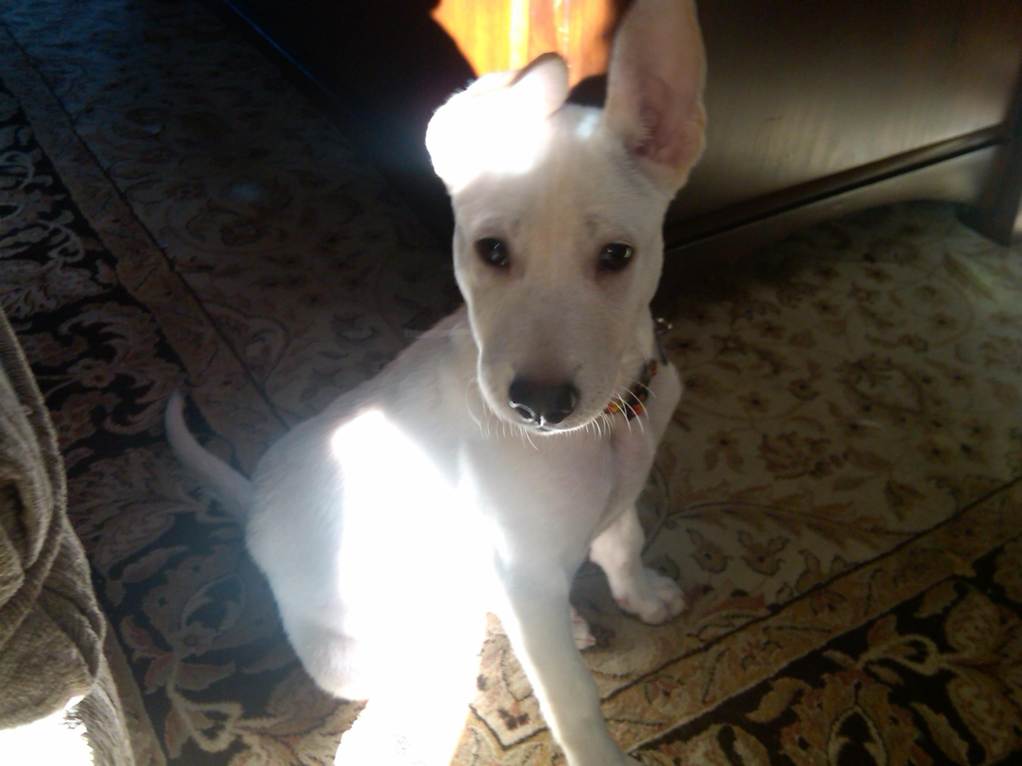 little dog7
