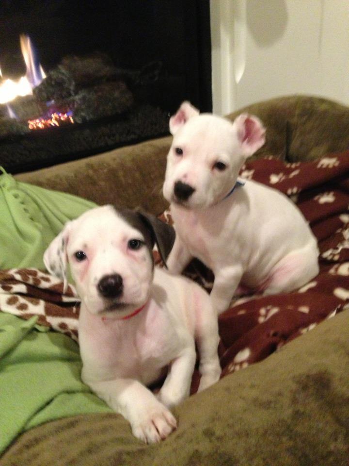 Kingston and sister