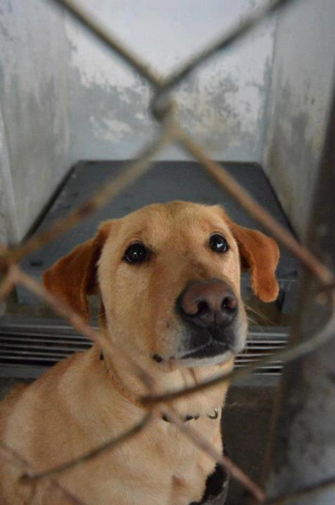 dolly at the shelter
