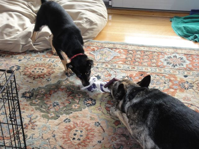 Kandee and Tanner playing tug of war