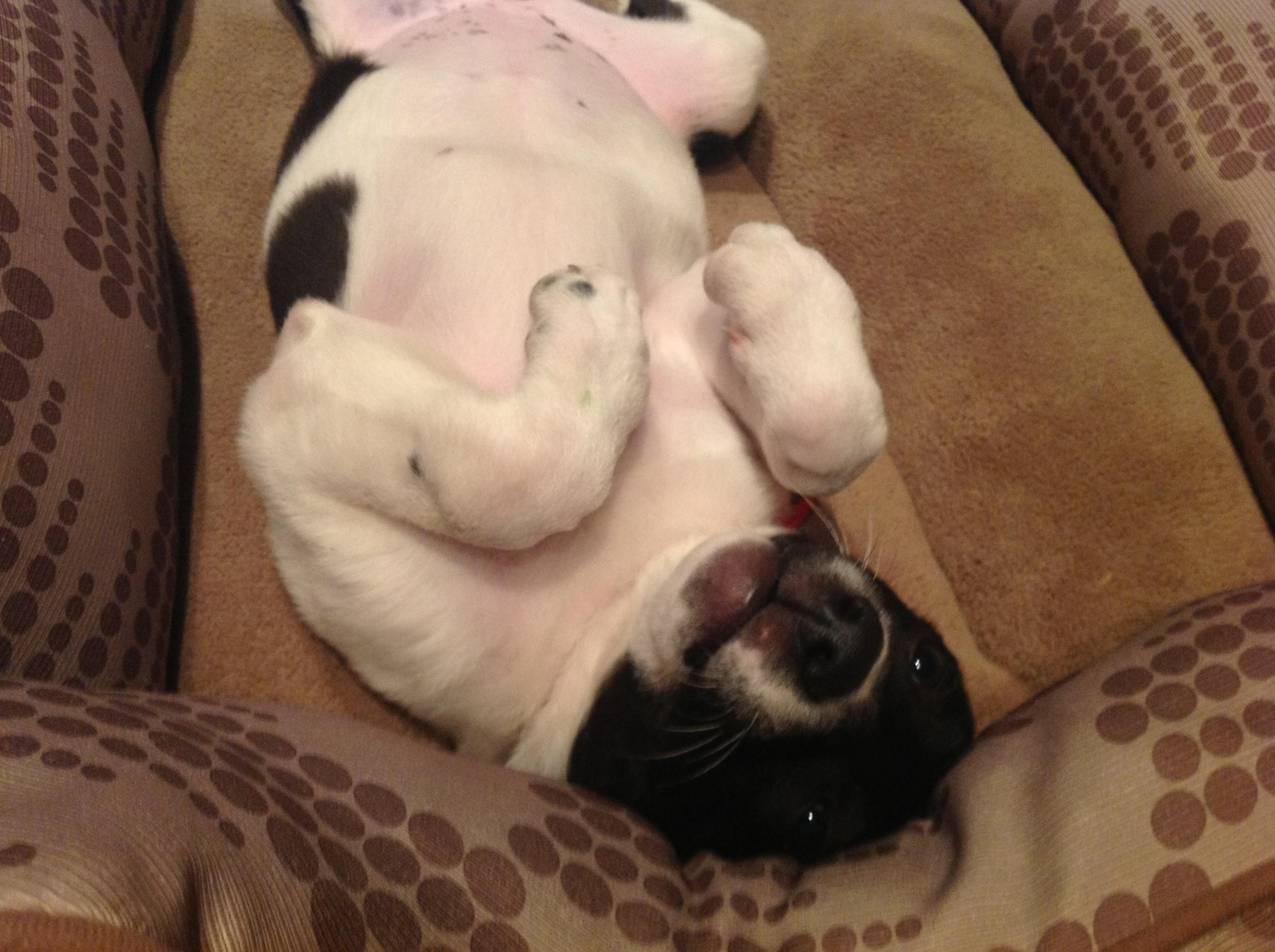 upside down Raina