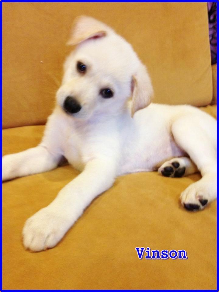 Vinson 05.20